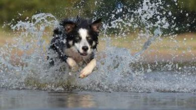 Photo of Why does my Border collie smell bad