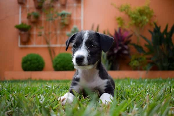 What do I need to know about my Border collie puppy