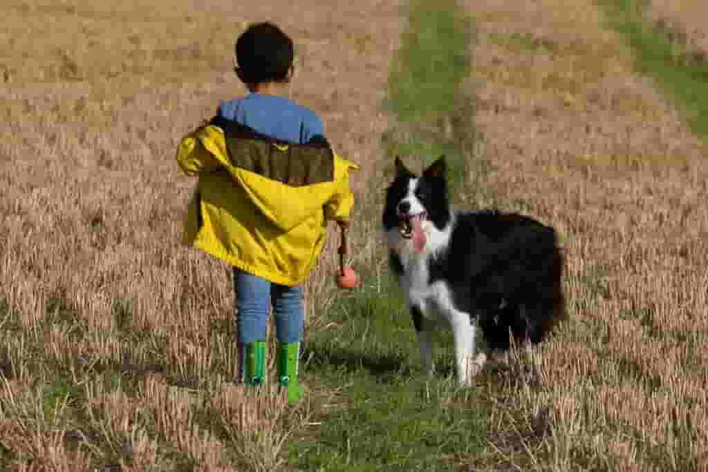 Photo of Will border collies protect their owners