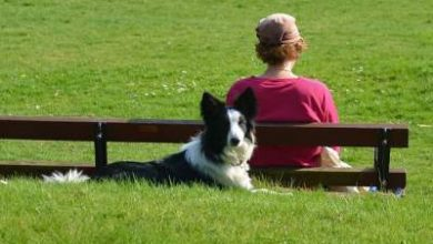 Photo of Are border collies a one person dog