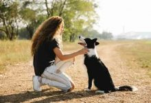 Photo of What are the pros and cons of owning a border collie