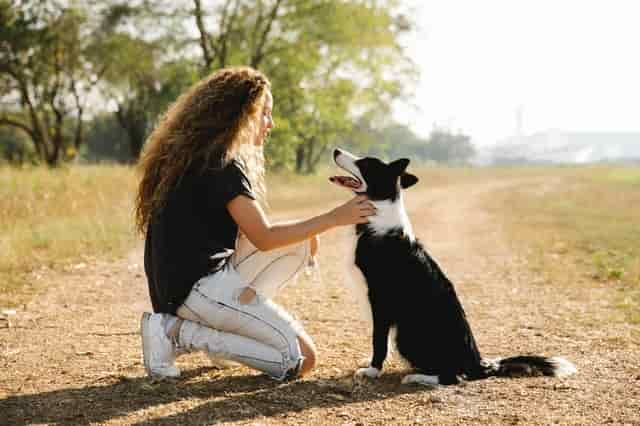 What are the pros and cons of owning a border collie