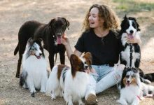 Photo of Which is better border collie or Australian shepherd