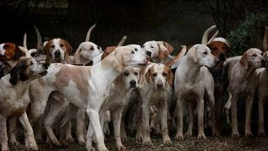 Photo of What are the smartest dog breeds 2021