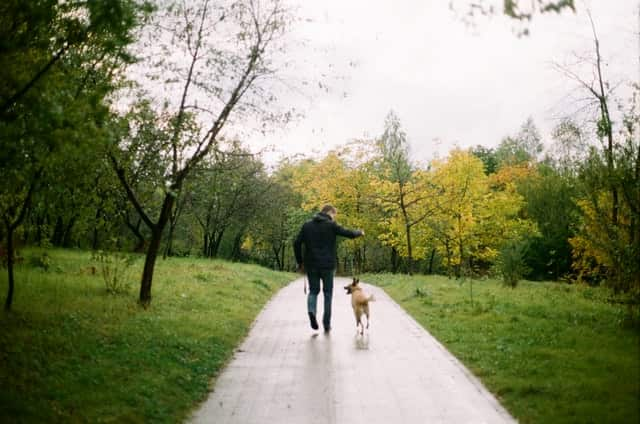 Dog Friendly Parks In Wollongong, NSW