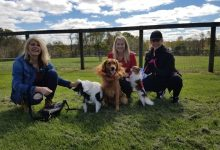 Photo of Dog Friendly Parks in Croydon, VIC