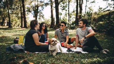 Photo of Dog Friendly Parks in Liverpool, NSW