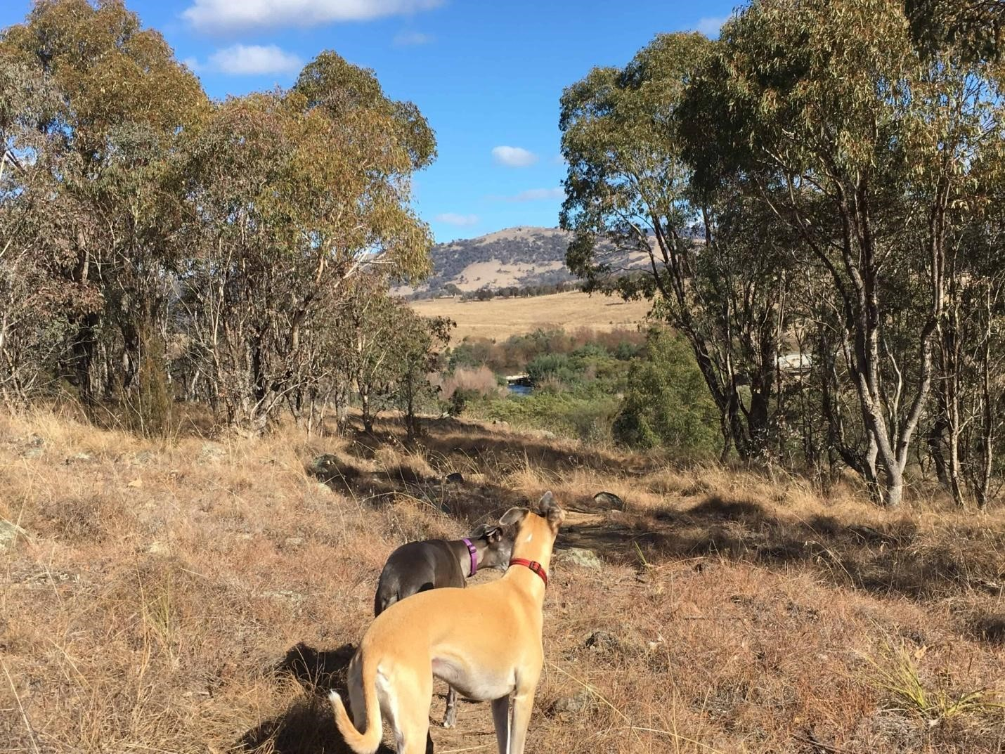 Point Hunt Dog Exercise Area